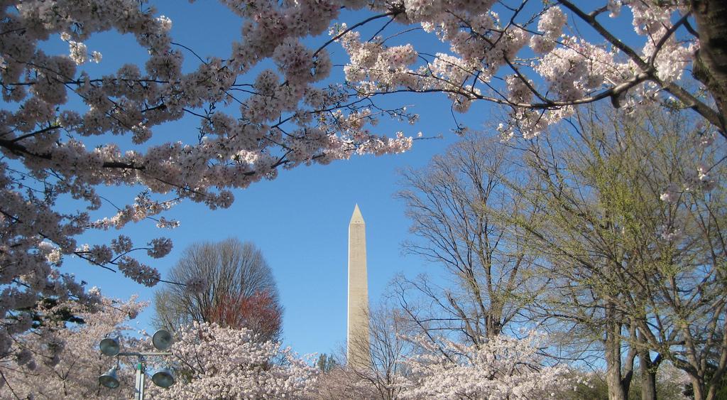 Wauw: Zó ziet Washington DC er in de lente uit! - Amerika Only