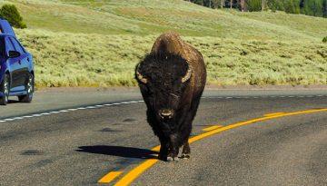 20141117130547_bizons-3-foto-anneloes-keunenamerika-only