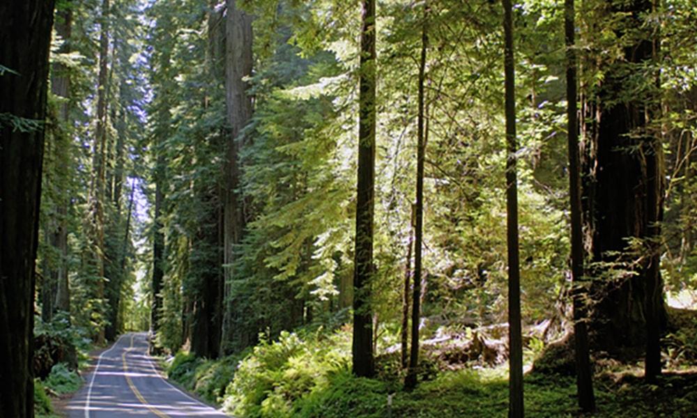 Humboldt Redwoods State Park - Christian Heeb