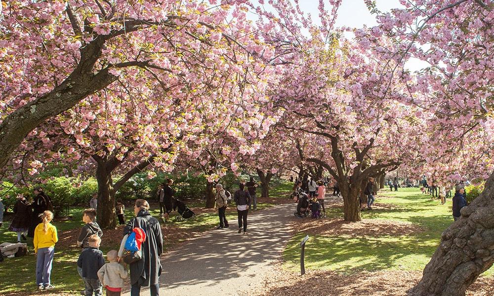Brooklyn Botanic Garden - Tagger Yancey IV via NYC & Company