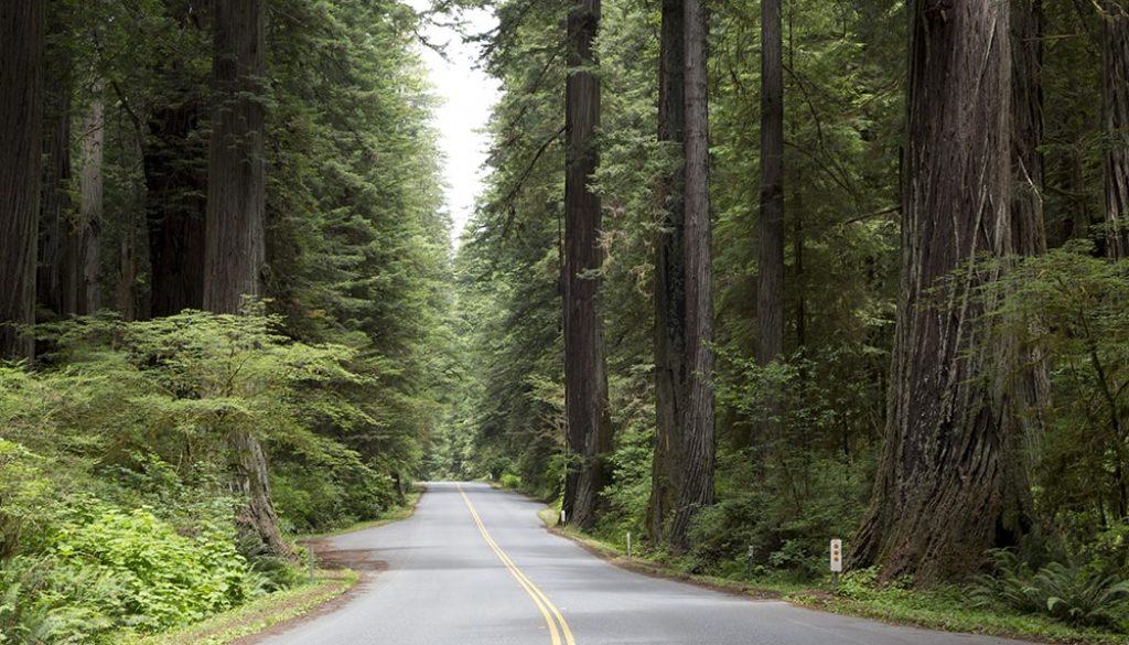 Humboldt Redwood State Park, Californië - Carol Highsmith via Visit California