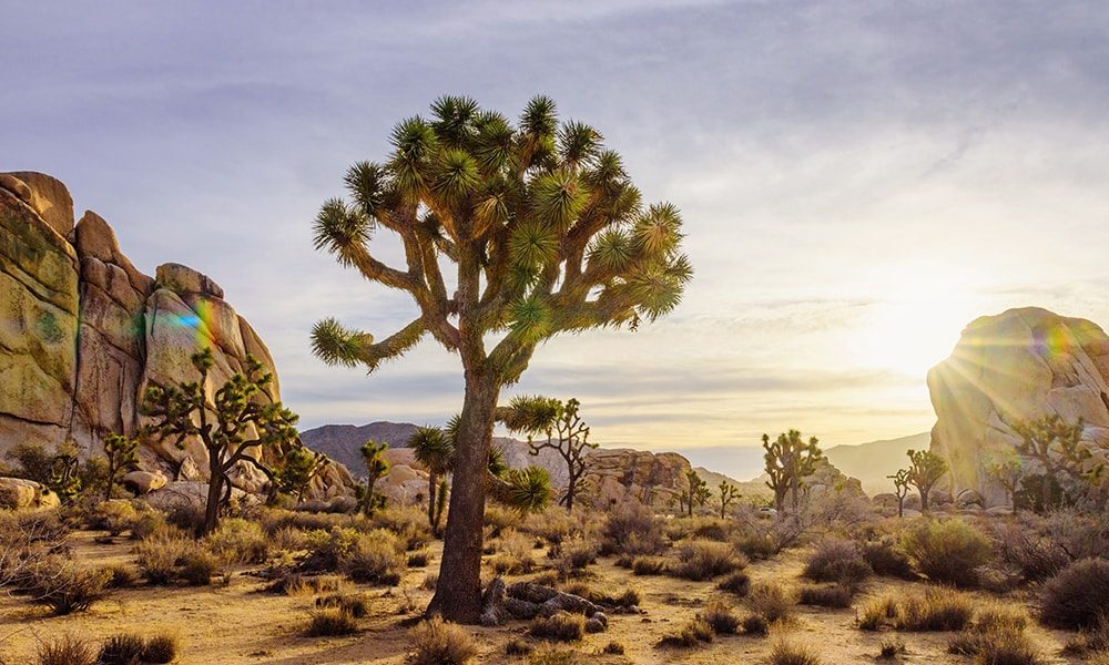 Joshua Tree National Park 4 - Myles McGuinness via Visit California