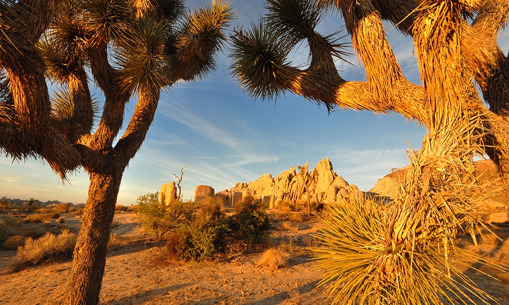Joshua Tree National Park - Michael Lanza via Visit California