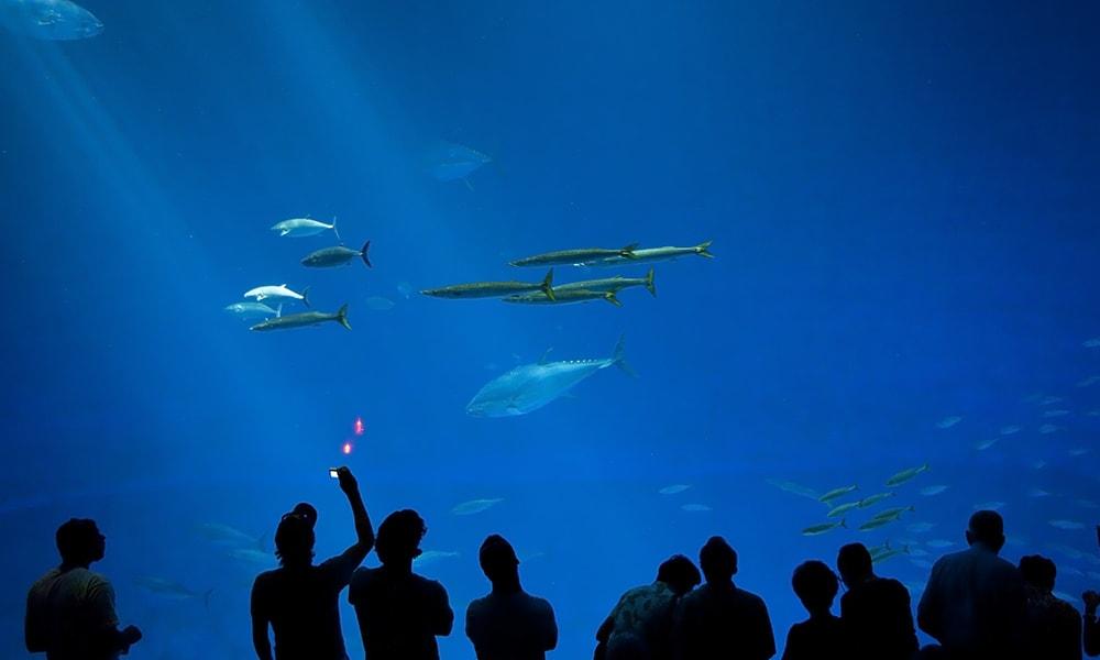 Monterey Bay Aquarium 2 - Andreas Hub via Visit California