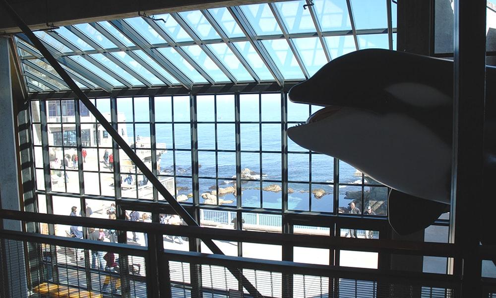 Monterey Bay Aquarium 2 - Blaise via Visit California