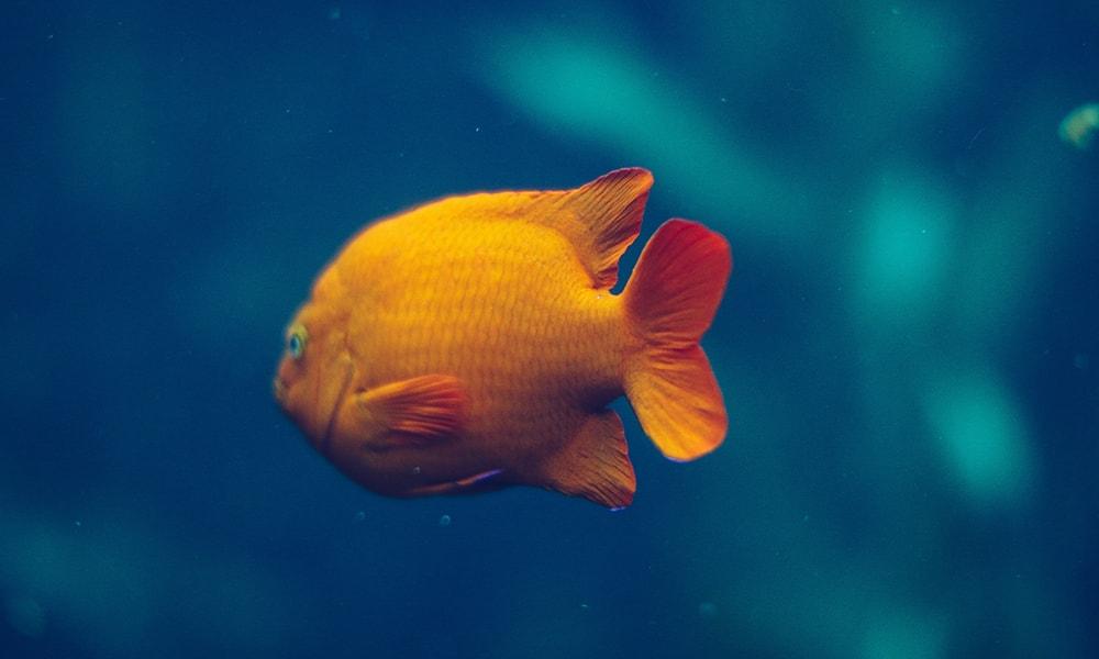Monterey Bay Aquarium 3