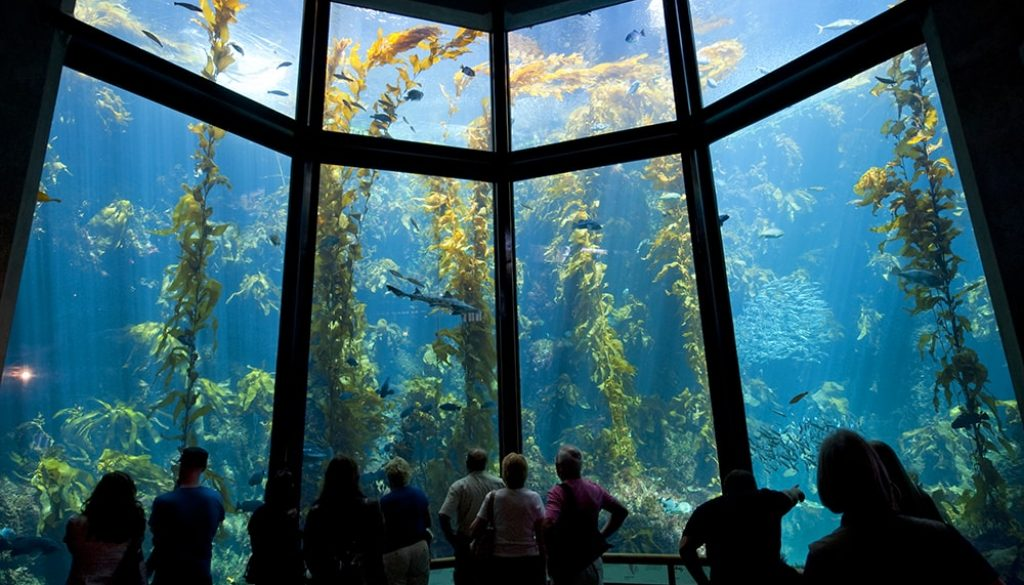 Monterey Bay Aquarium - Andreas Hub via Visit California