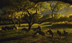 Disney's Animal Kingdom - Todd Anderson via WDW News