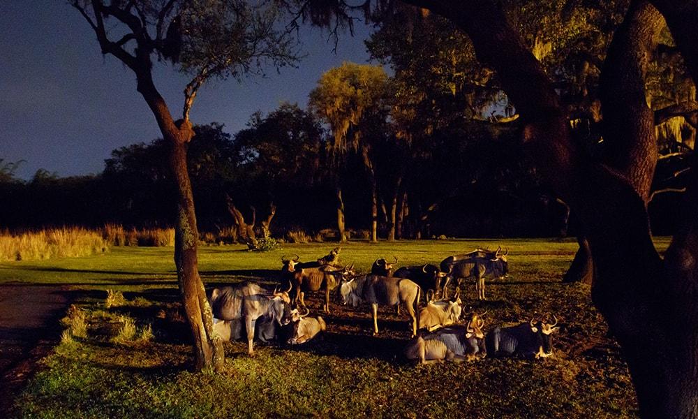 Disney's Animal Kingdom - Courtney Di Stasio via WDW News