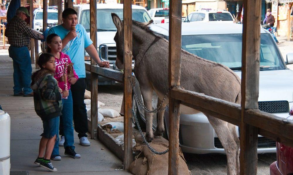 Oatman - Public Domain via Flickr-min