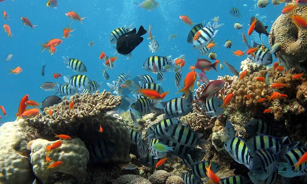 Vissen - Pixabay