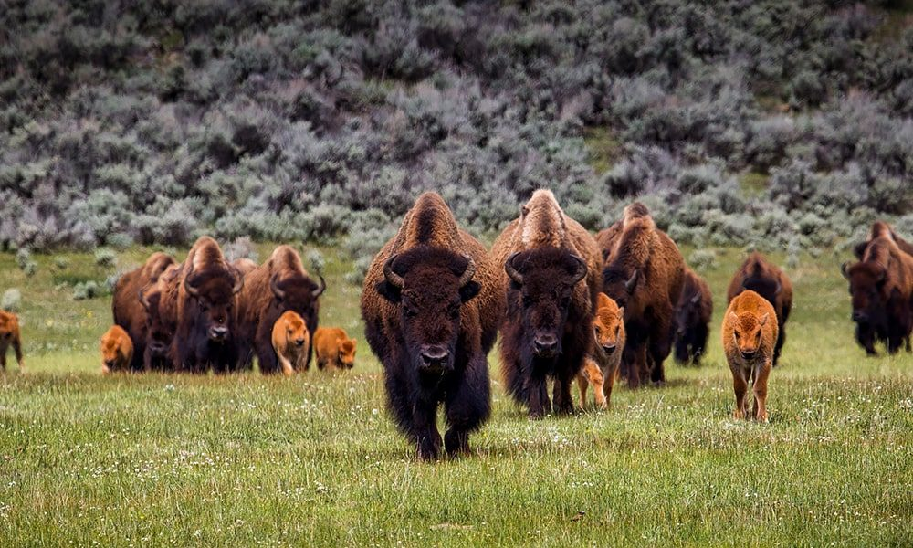 Yellowstone National Park - Pixabay-min