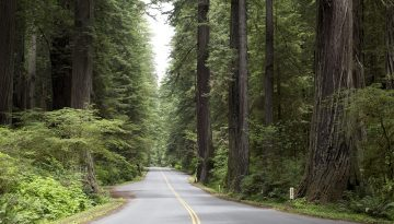 Humboldt Redwood State Park, Californië - Carol Highsmith via Visit California