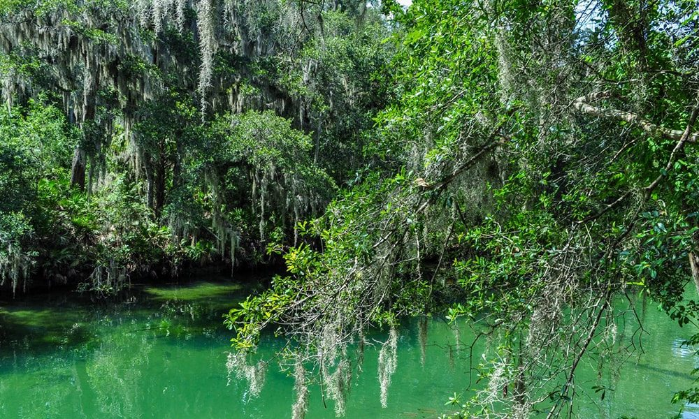 Blue Springs State Park - Anneloes Keunen via Amerika Only