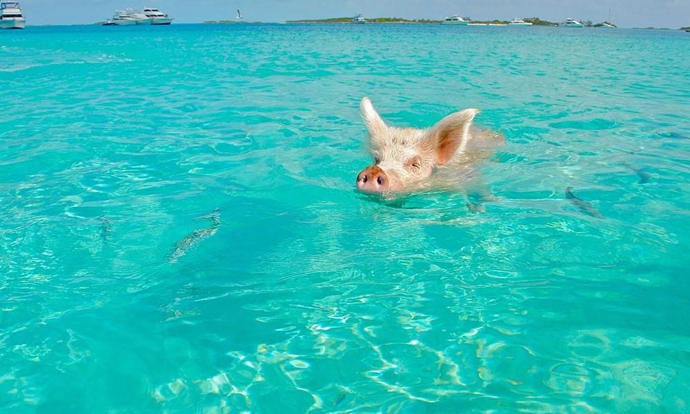 Bahama's - Pixabay