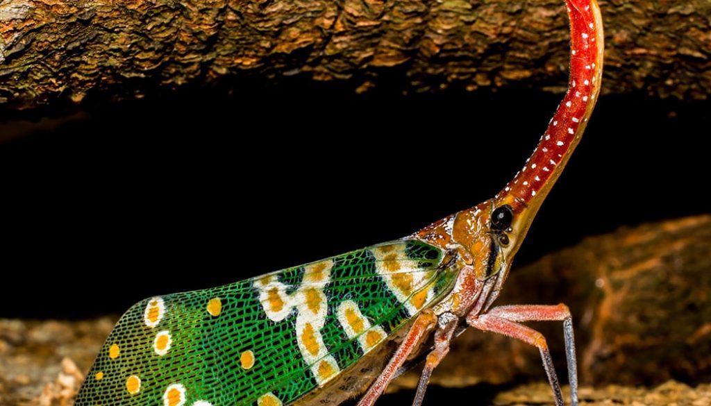 Cicadas - Pixabay-min