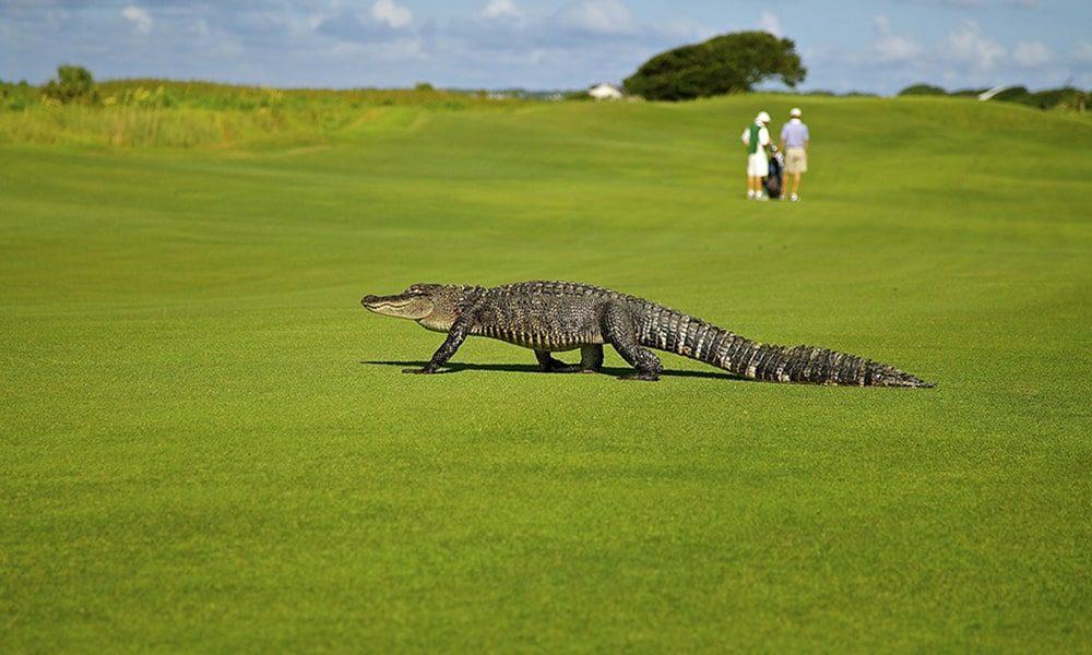 Golf - Pixabay