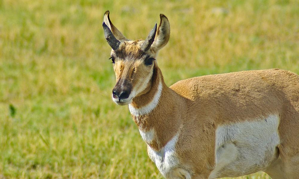 Custer State Park - Pixabay