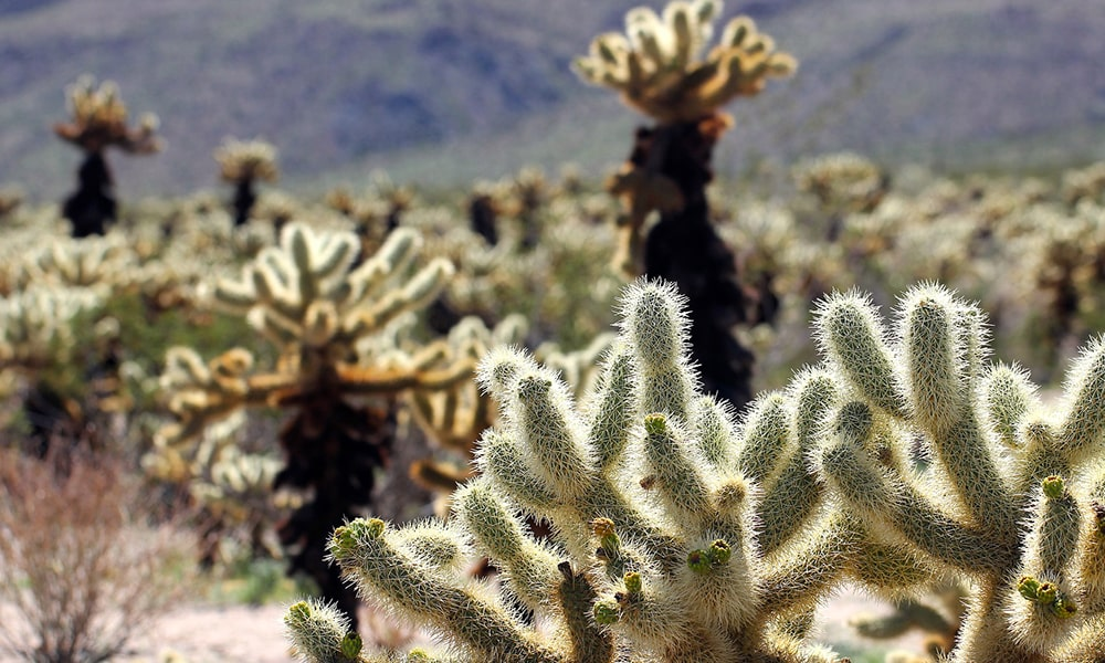 Joshua Tree National Park - Pixabay-min