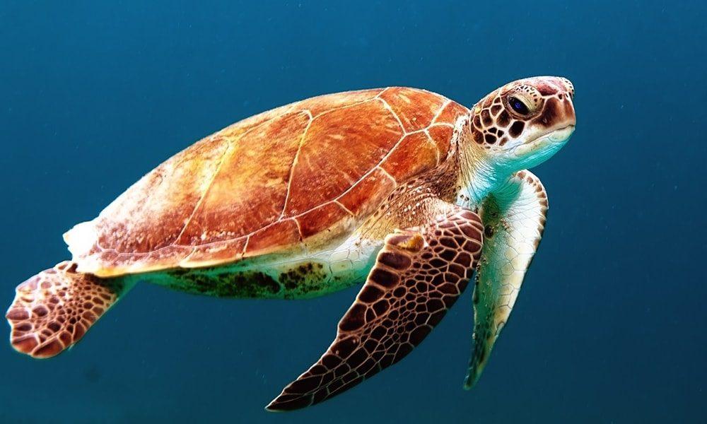 Aquarium - Pixabay-min