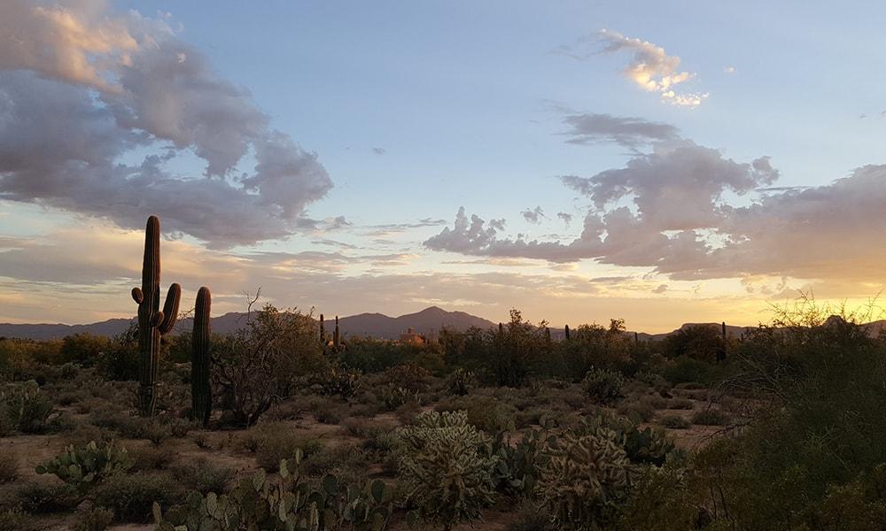 Saguaro National Park - Pixabay-min