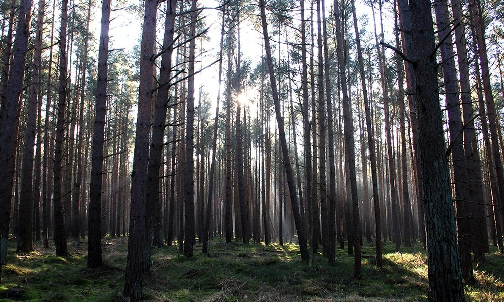 Bomen - Unsplash-min