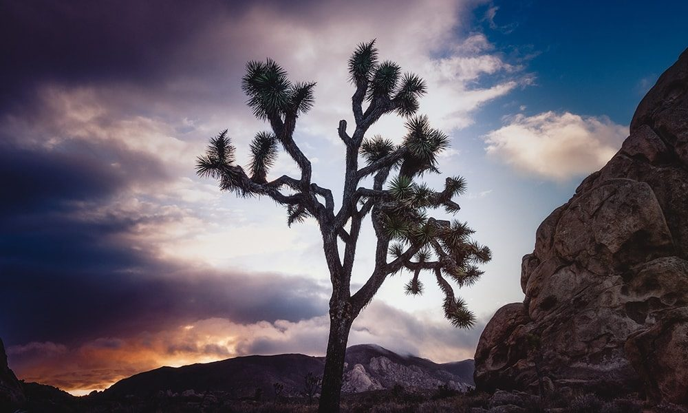 Joshua Tree National Park - Unsplash