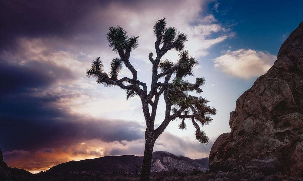 Joshua Tree National Park - Unsplash