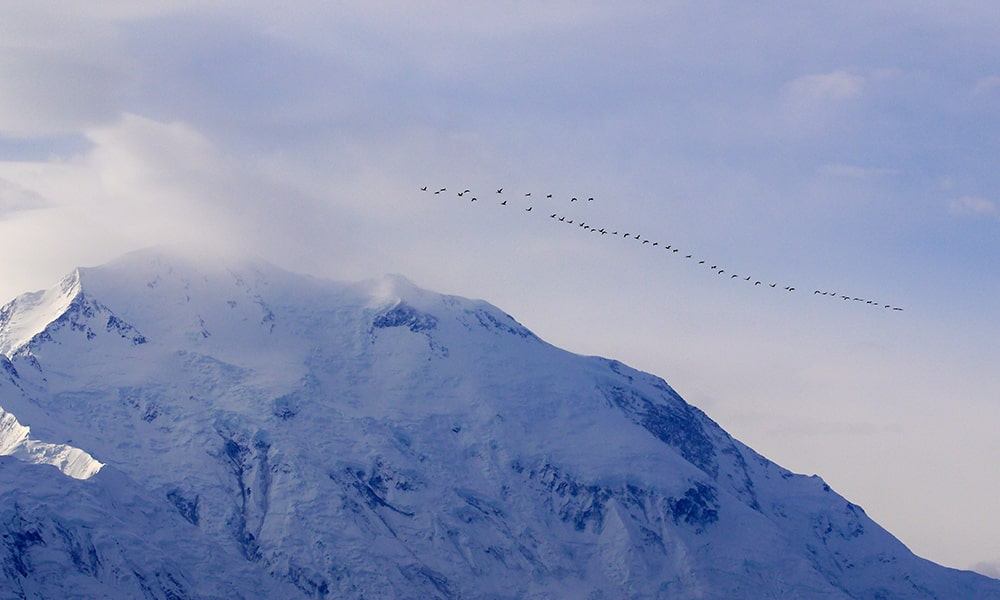 Denali National Park & Preserve - Unsplash-min