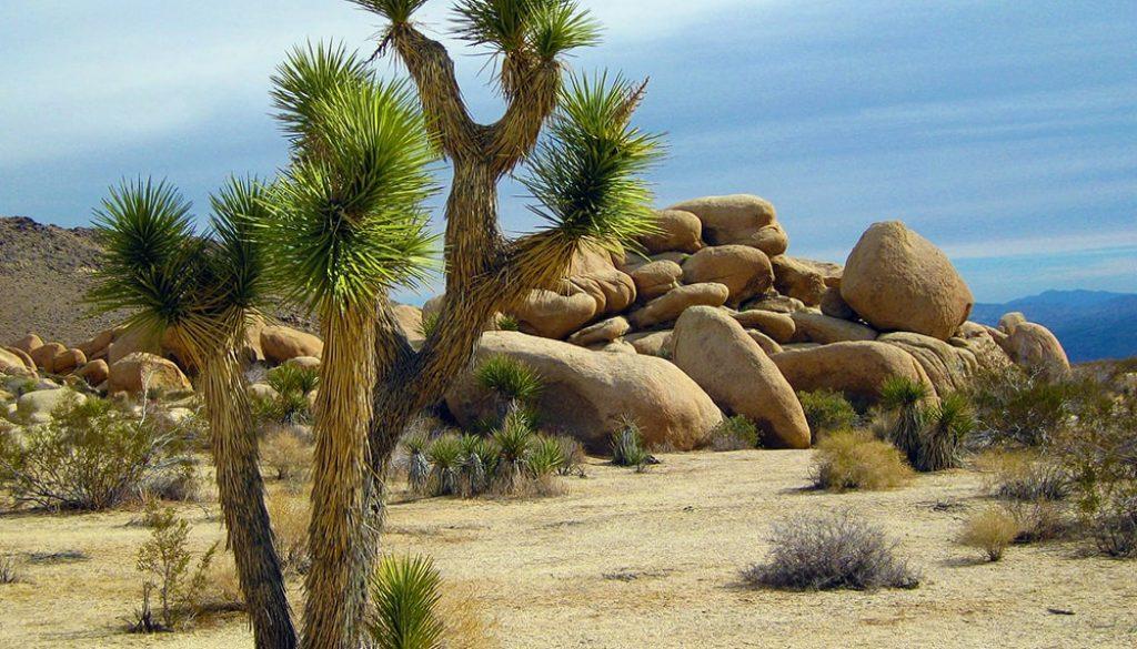 Joshua Tree National Park - Pixabay