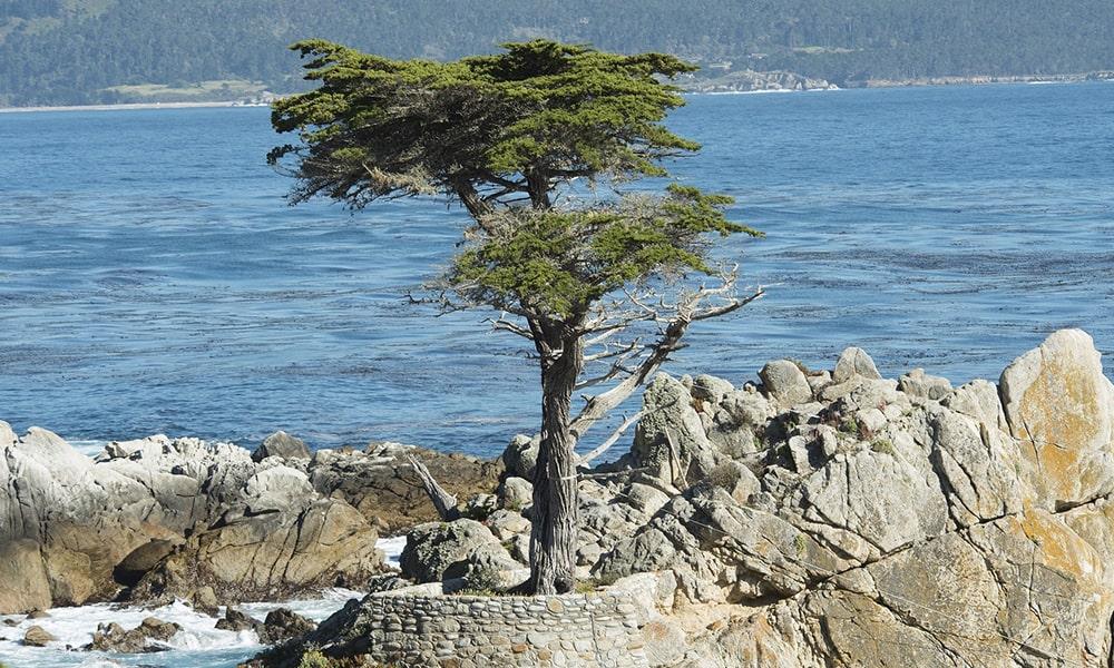 Monterey - Pixabay