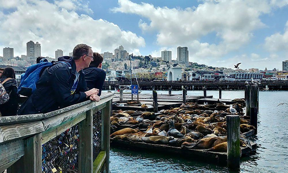 Sea Lions - Kevin Lux via Leven In SF