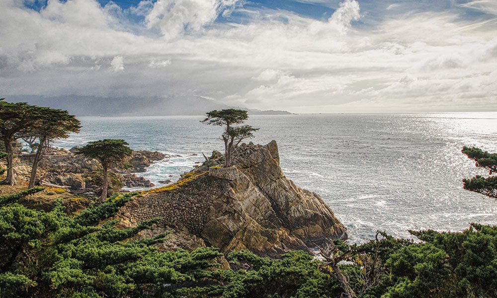Lone Cypress Tree - Unsplash