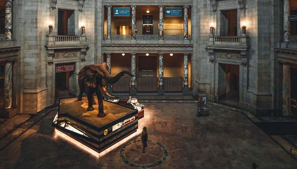 Smithsonian Institute - Unsplash